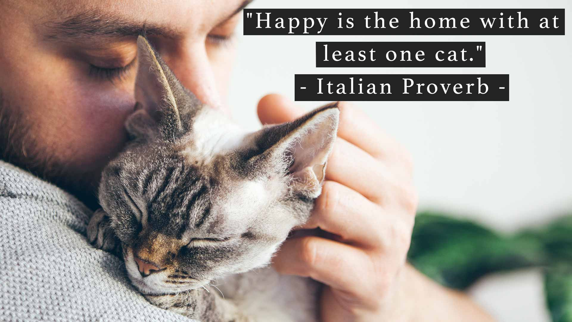 Happy is the home with at least one cat