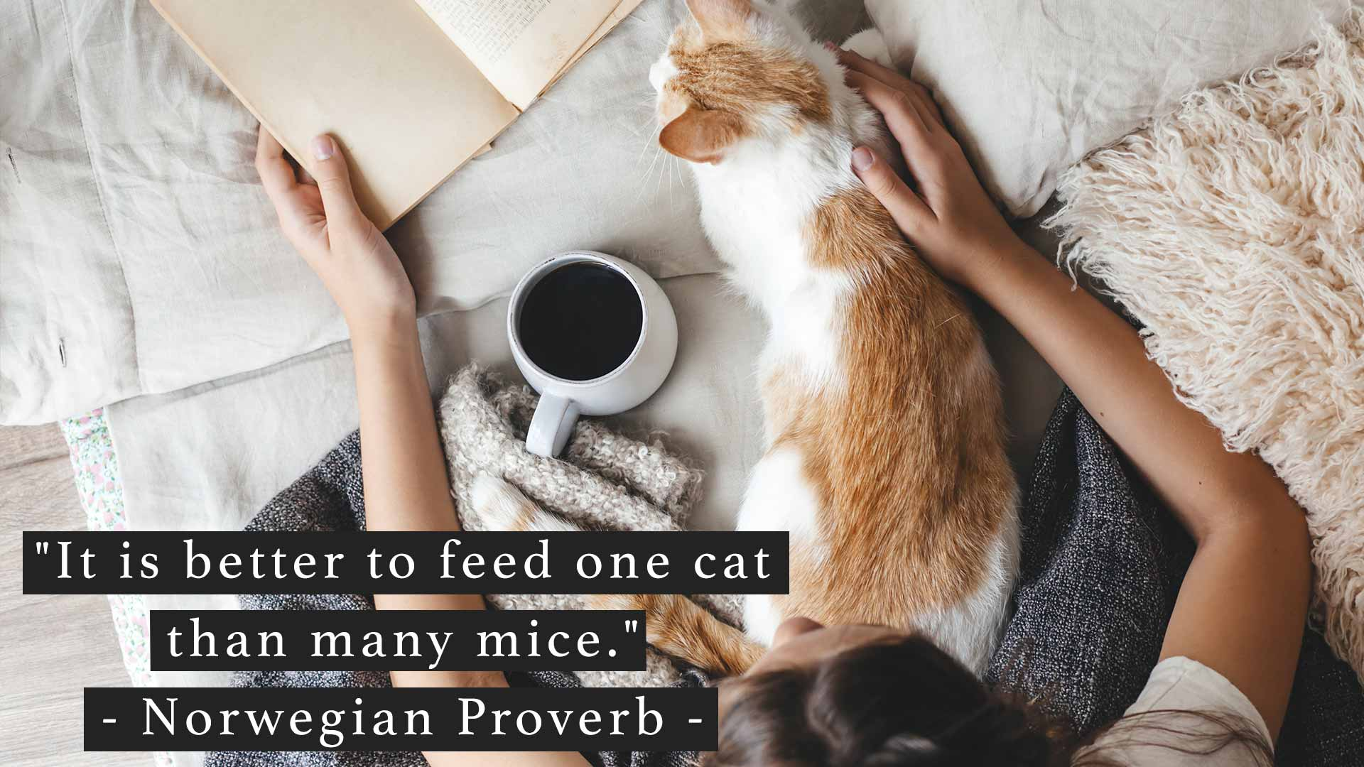 It is better to feed one cat than many mice