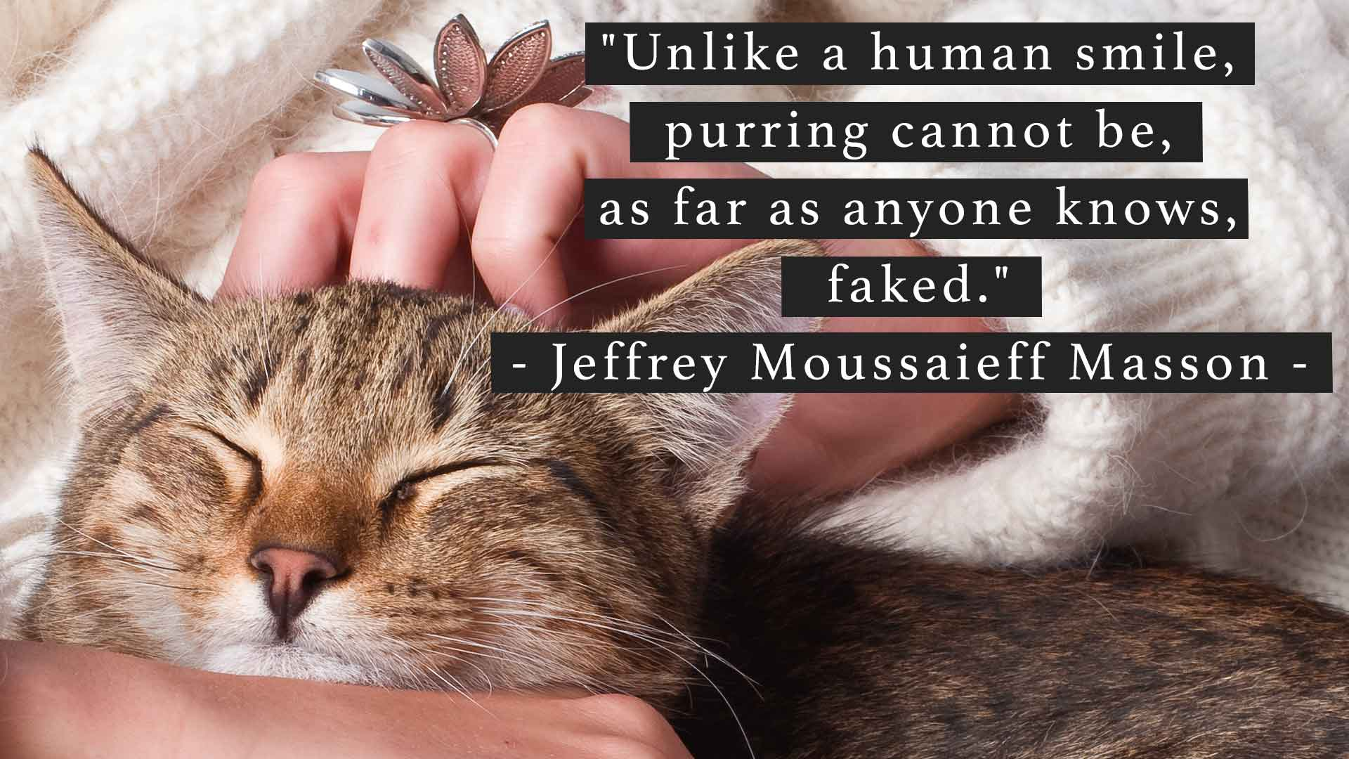 Unlike a human smile, purring cannot be, as far as anyone knows, faked
