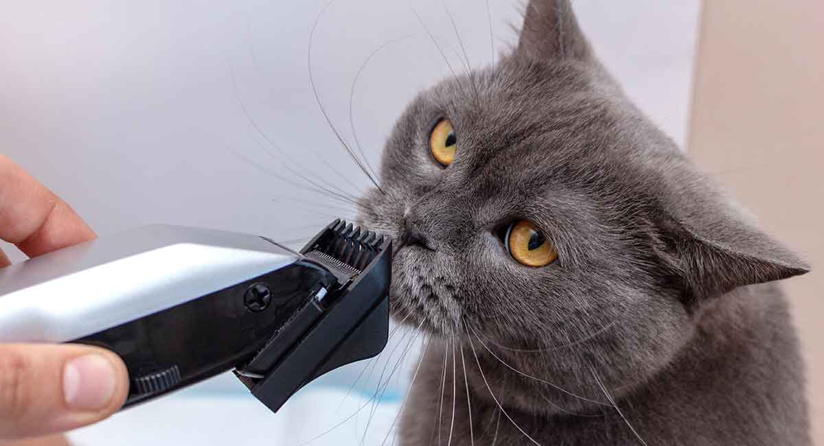 cat hair clippers