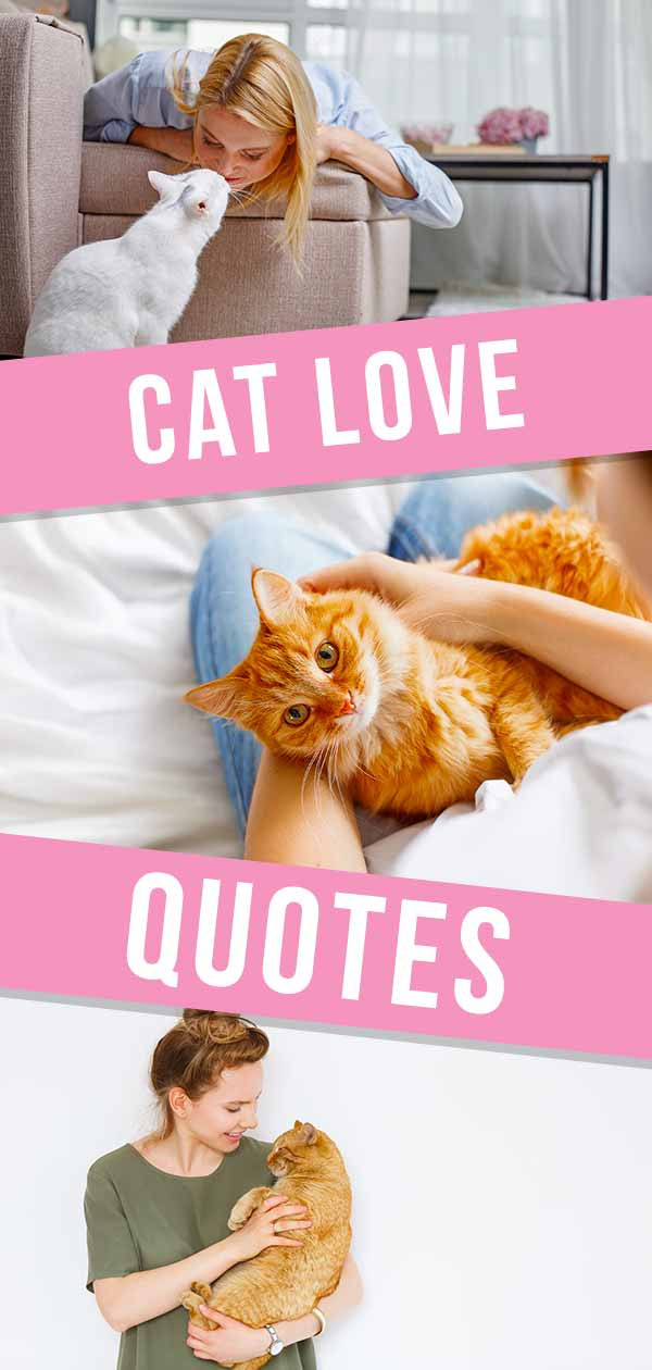 cat love quotes