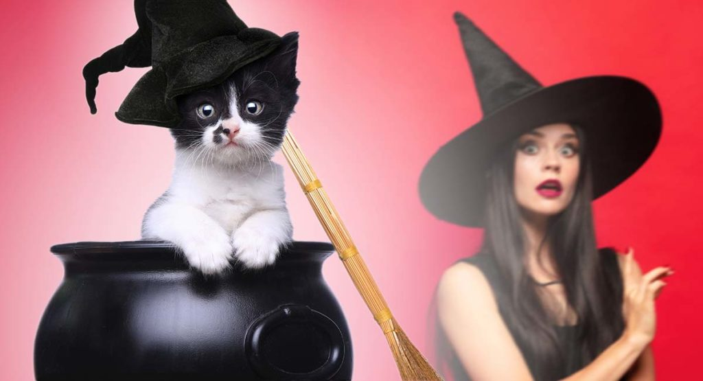Witch Cat Names Over 350 Magical Ideas For Your New Kitten