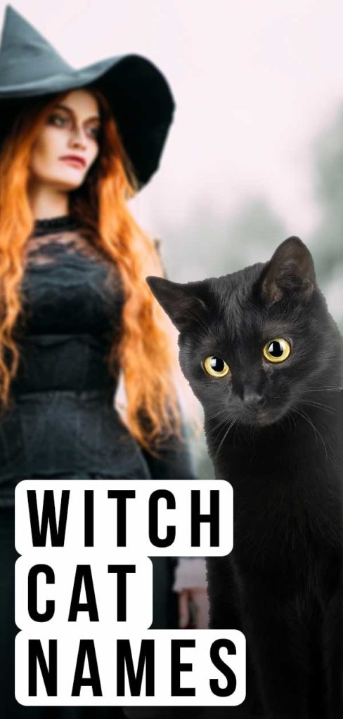 witch cat names