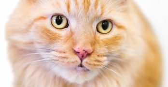 cat freckles