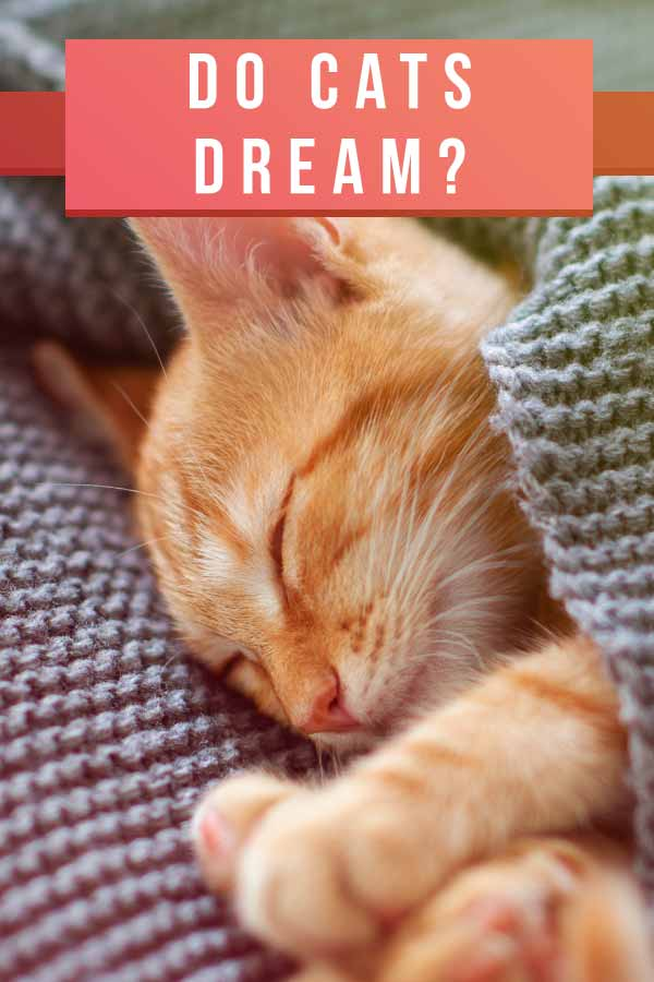 do cats dream