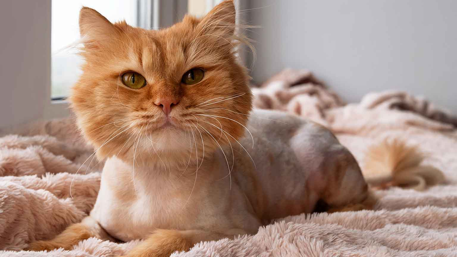 Lion Cut Cat - Fun And Practical Grooming Technique, Or Big Mistake?