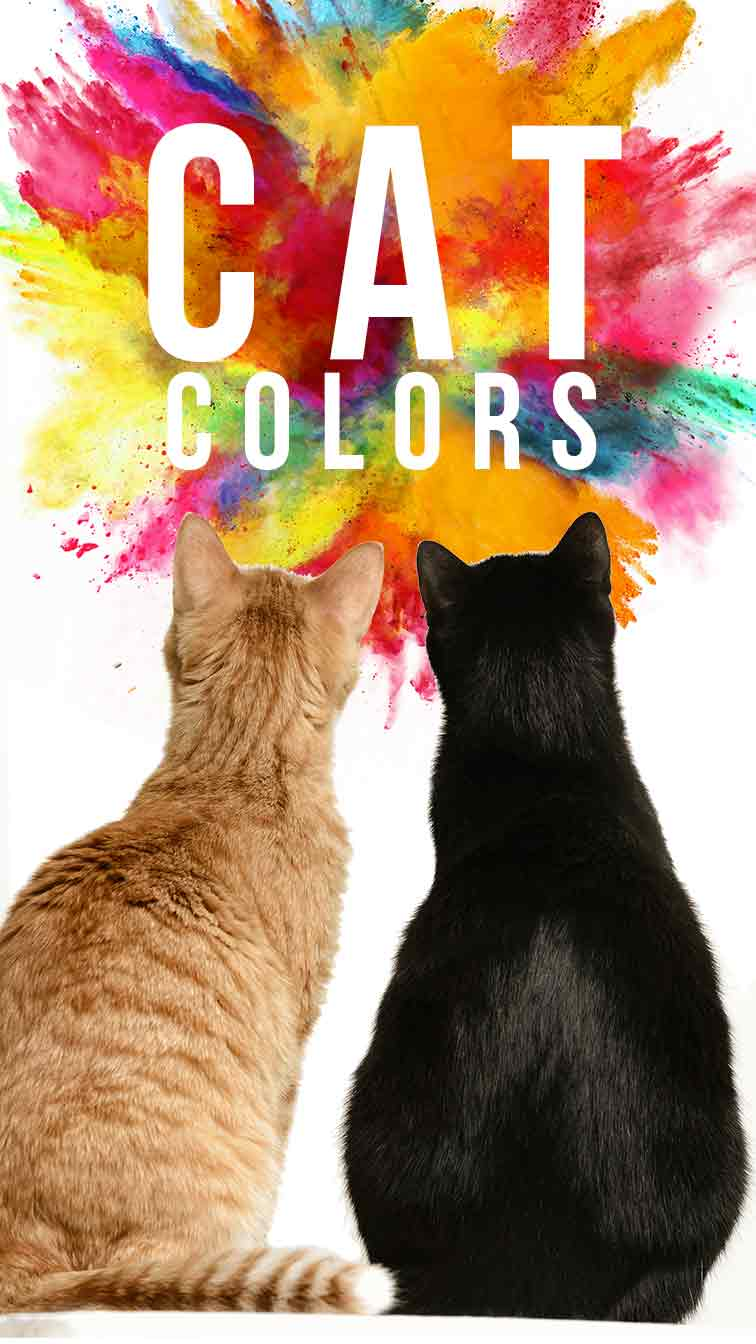 cat colors