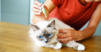 advantix for cats