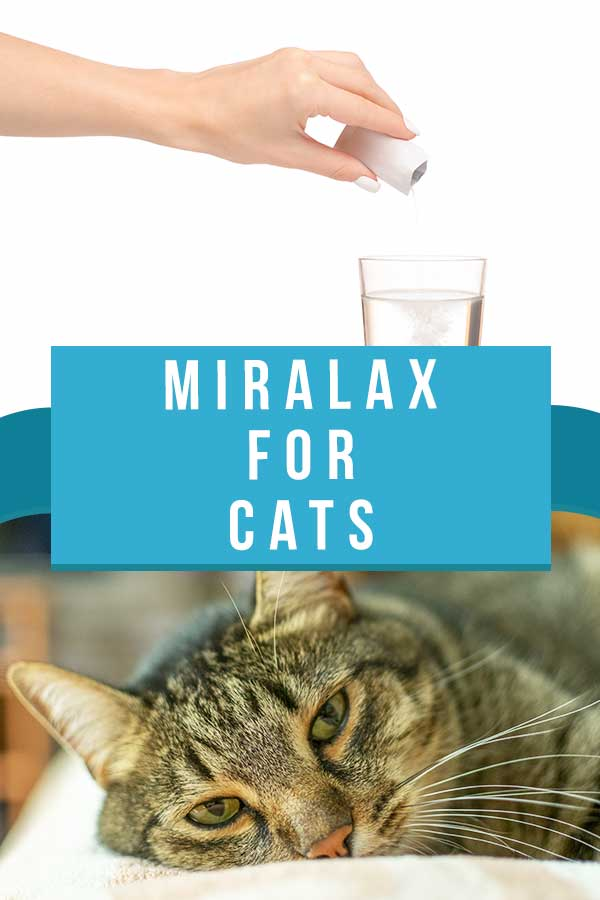 miralax for cats