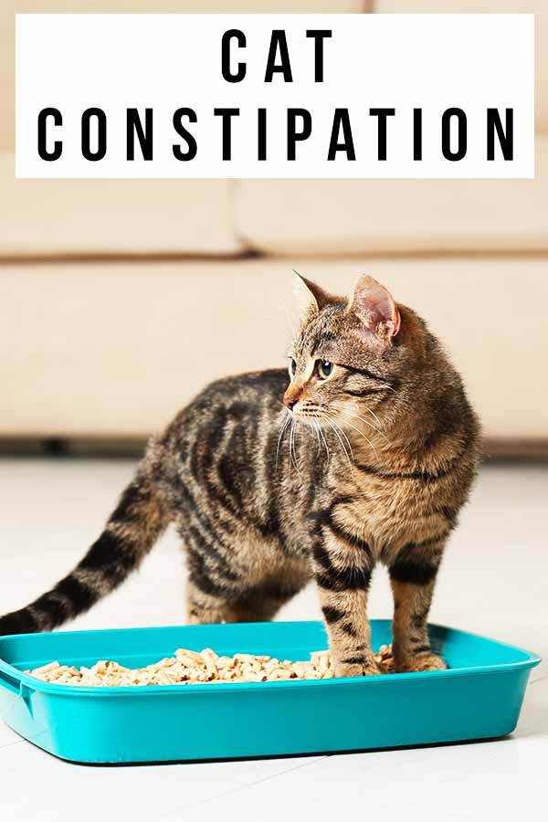 cat constipation