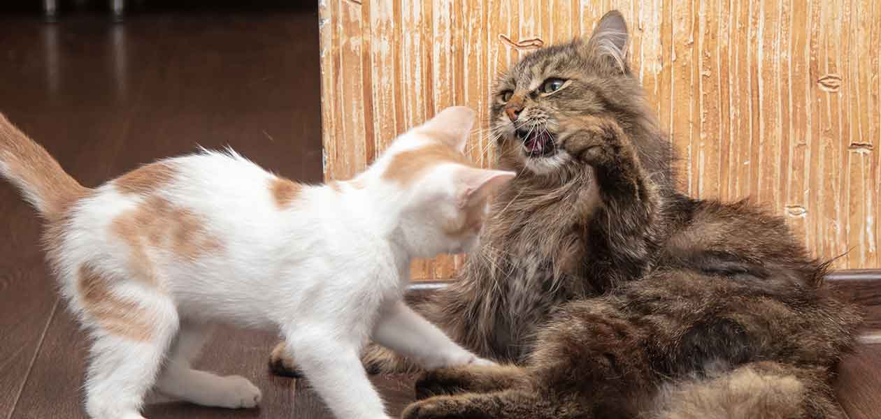 how to tell if cats are playing or fighting
