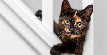 black and orange cat