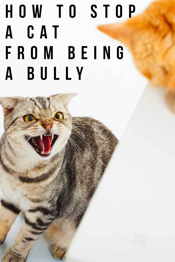 how to stop a cat from being a bully