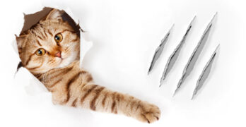 how to stop a cat scratching walls