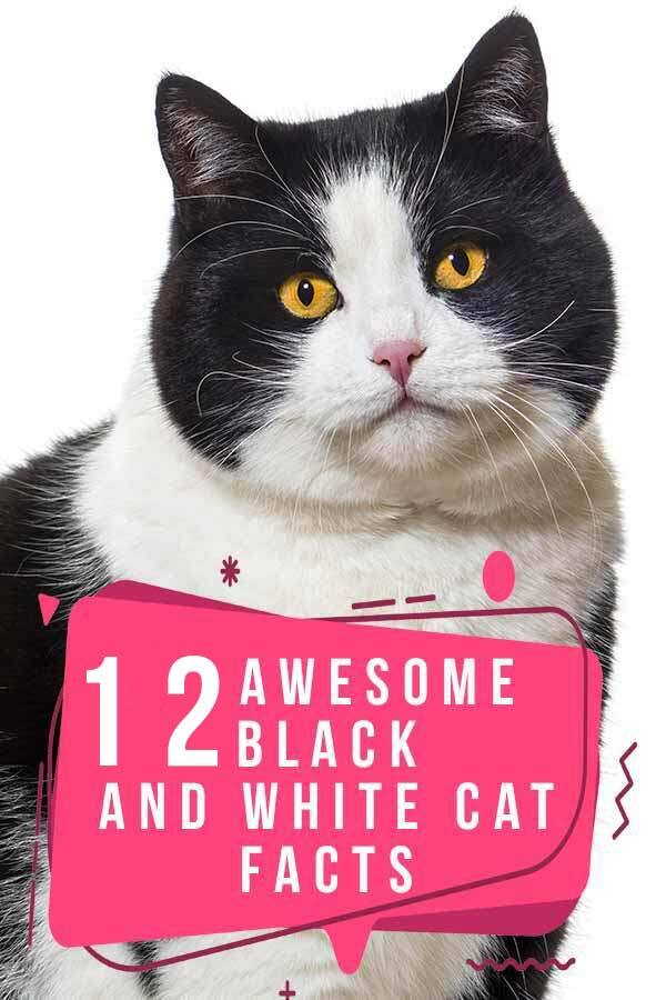 black and white cat facts