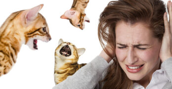 how to make a bengal cat stop meowing
