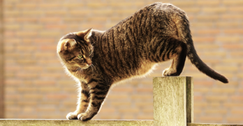 how to stop a cat from climbing a fence