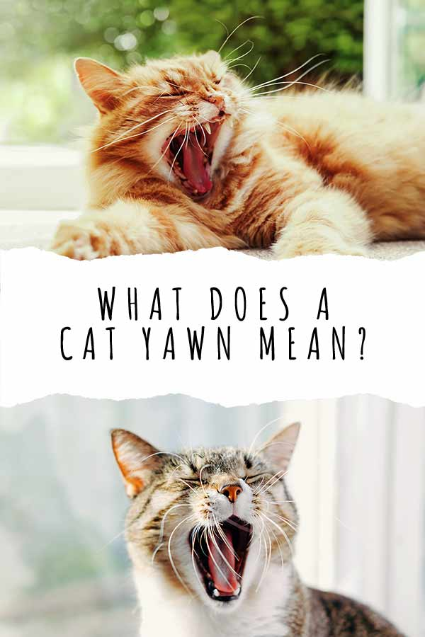 what does a cat yawn mean