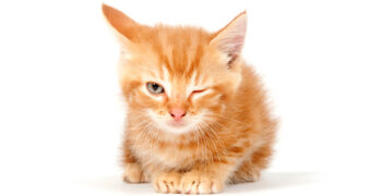 what does it mean if a cat winks at you