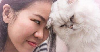 what does it mean when a cat head butts you