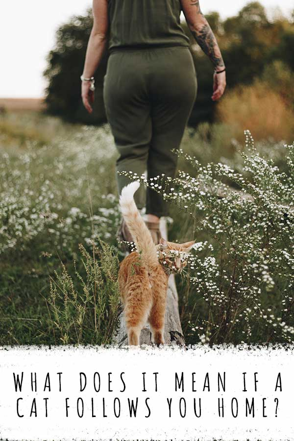 what does it mean if a cat follows you home