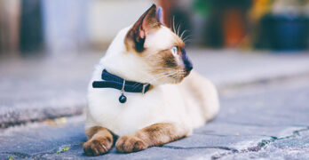 what size cat collar do i need