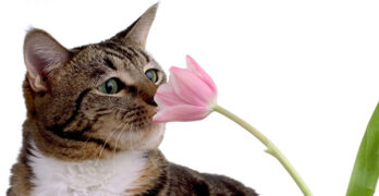 what smells do cats like