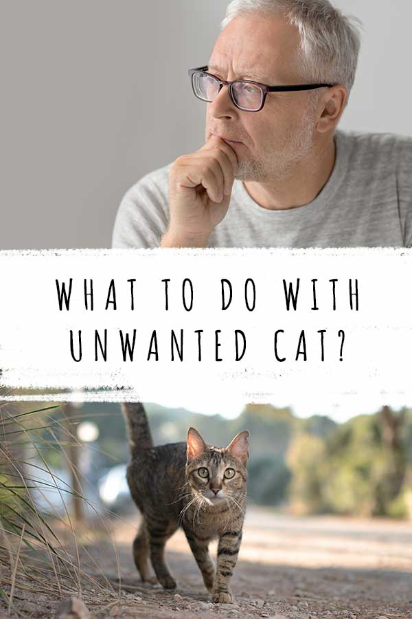 what to do with unwanted cat