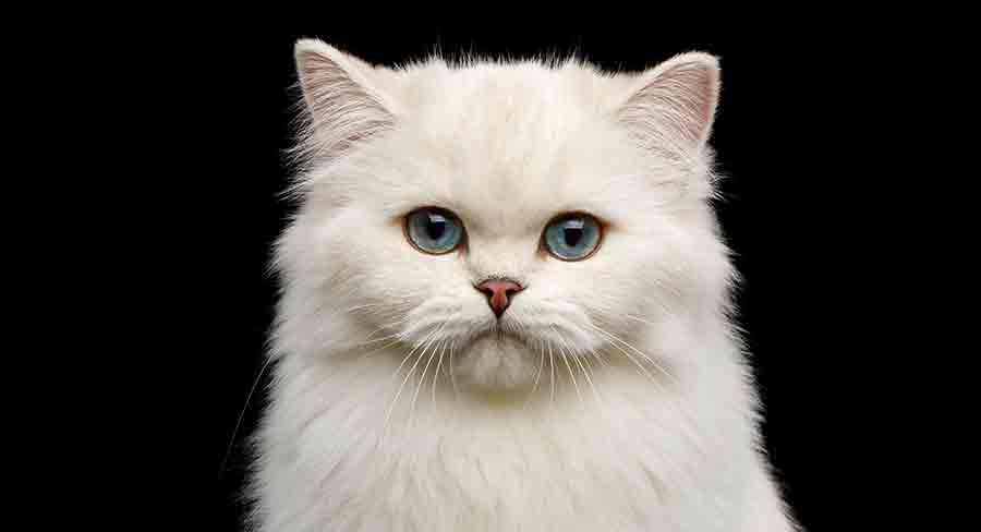 white female cat names