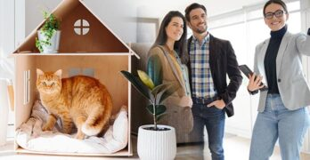 What to do with cat during house showings