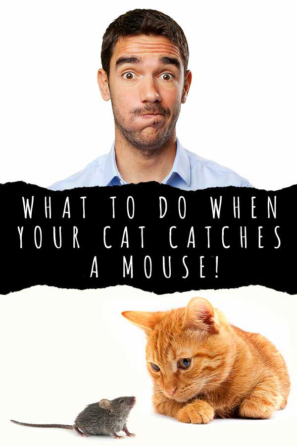 what to do when your cat catches a mouse