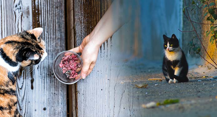 what do stray cats eat and drink