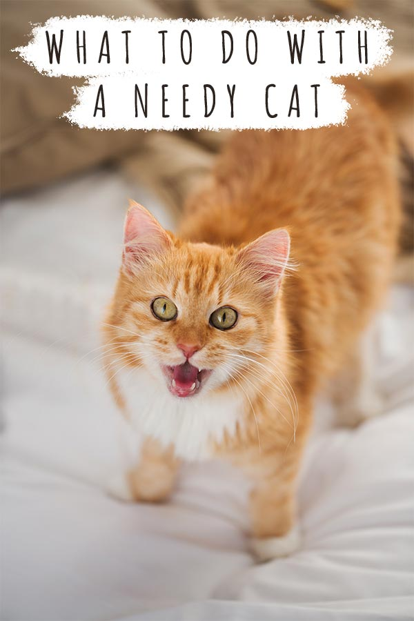 what to do with a needy cat