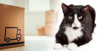 what do you do with feral cats when you move